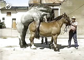 Muscled horses have awesome doggy style