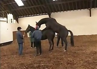 Extraordinaire horses are screwing in doggy style