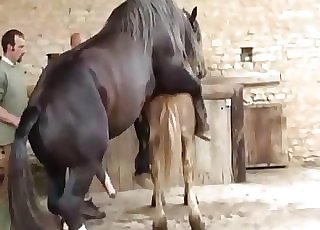 2 horses having nice sex in doggy pose