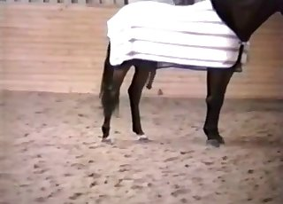 This trained horse looks incredible