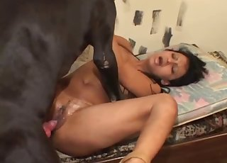 Perfect pooch brute copulate with a noteworthy slut